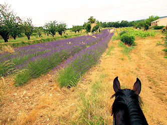 Trail in der Provence
