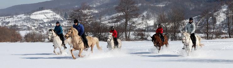 pferd reiter reiturlaub weihnachten silvester. Black Bedroom Furniture Sets. Home Design Ideas